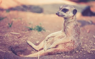 PPC London with Orchid Box – We Don't Compare Meerkats